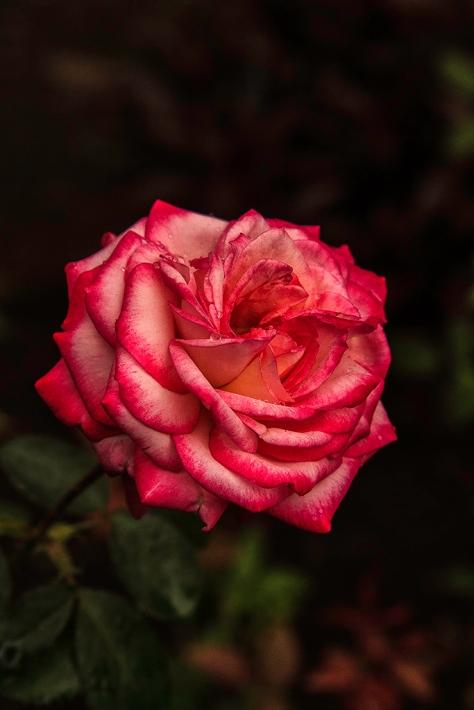 Flowers_1261