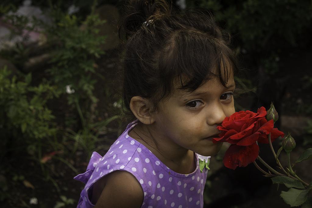 Roses2_4379